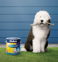 Dulux Weathershield Dog